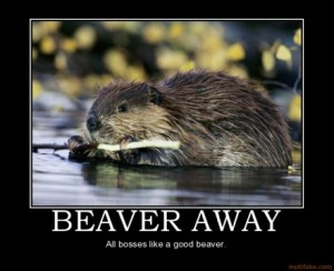 to beaver away meaning demotivation
