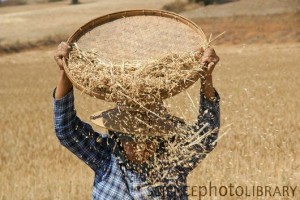 separate wheat from the chaff expression meaning